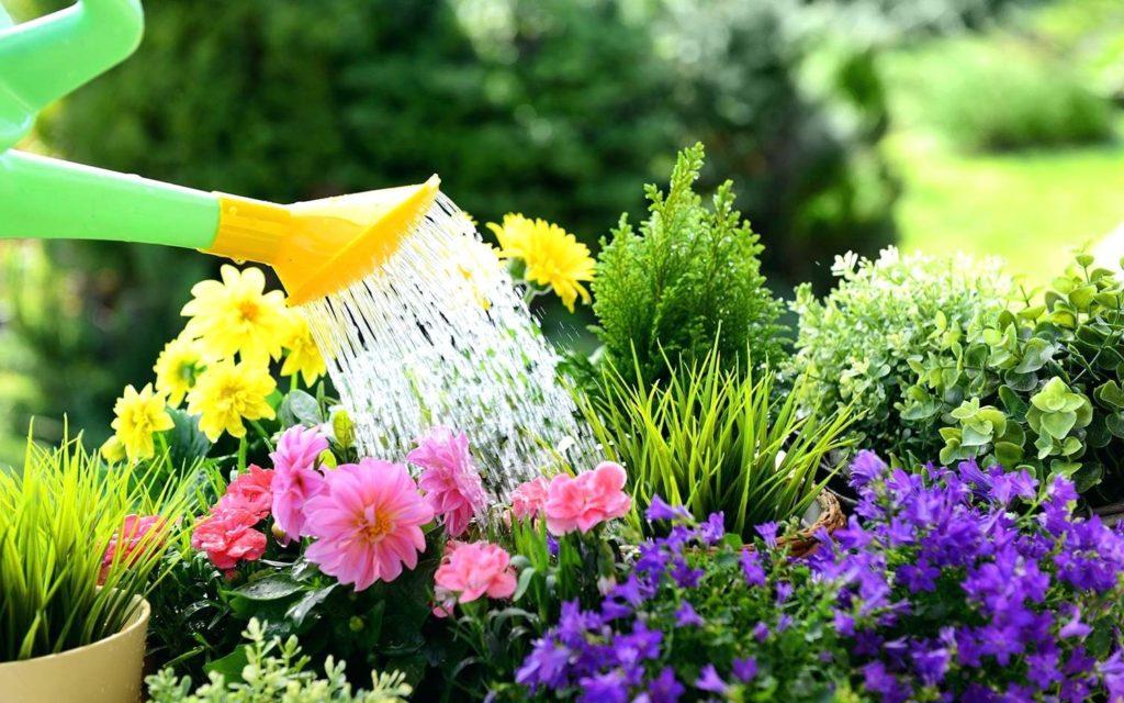 Полив цветов на террасах
