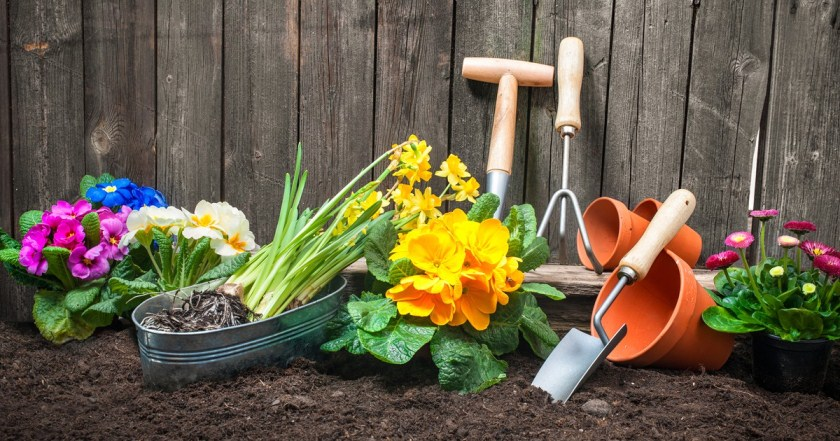 Поливаем цветы в саду правильно