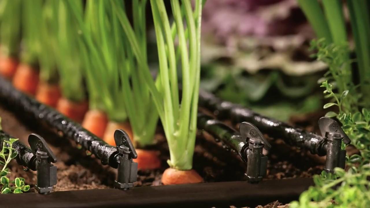 капельный полив в саду