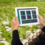 Water-Smart сельское хозяйство