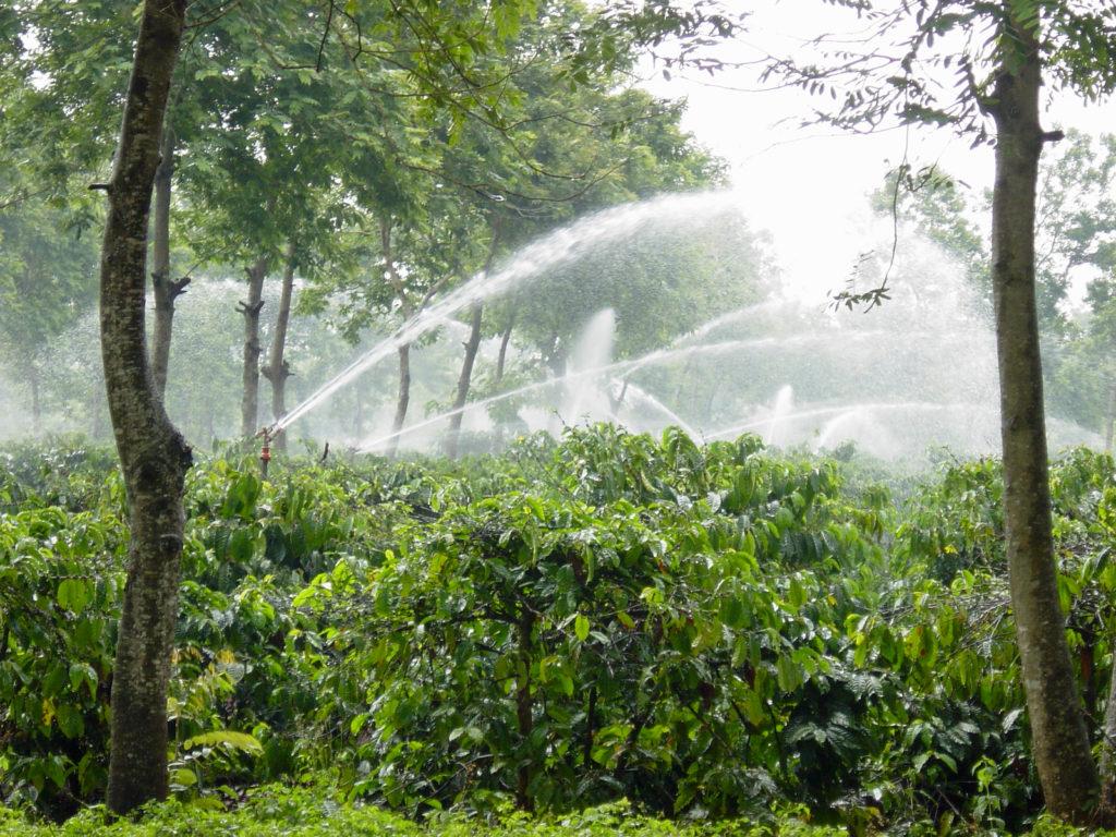 Полив кофейных плантаций во Вьетнаме