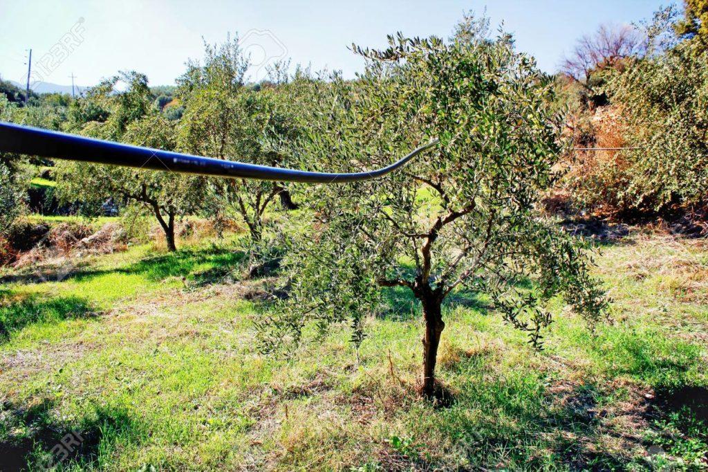 Система орошения в оливковой роще